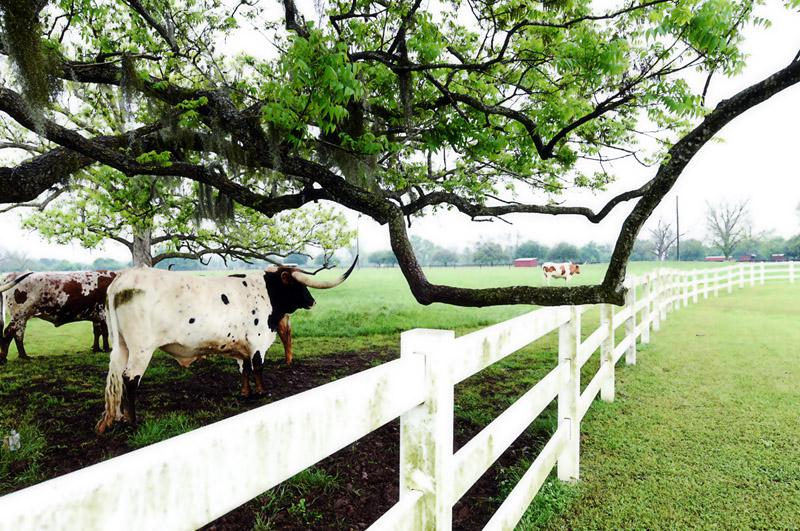 Texas Longhorns at Briscoe Manor
